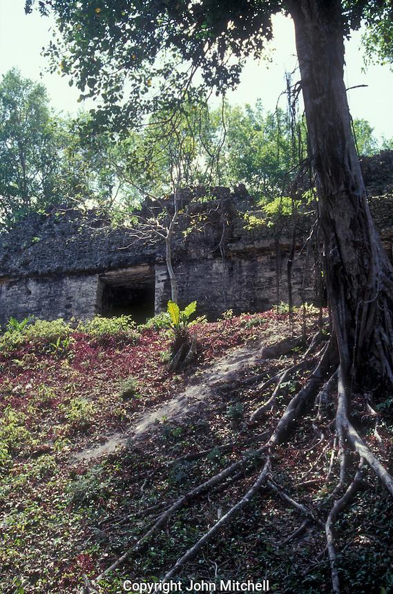 Plaza of the Seven Temples at the Mayan ruins of Tikal in Tikal National Park, El Peten, Guatemala