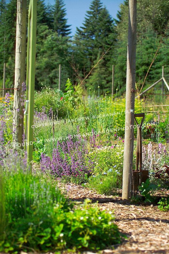 At the entrance to this organic kitchen garden, mixed vegetables and colorful flowering herbs show their full summer abundance on either side of the mulched center path. Garden design by Stenn Design
