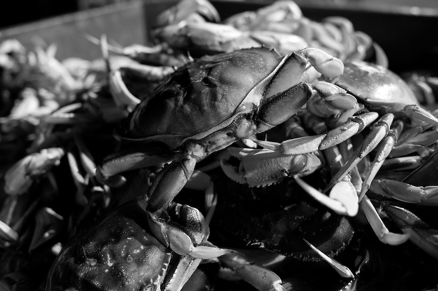 A bin full of fresh dungeness crab is seen before being cooked and sold to seafood distributors at Pezzolo Seafood on Pier 45 in San Francisco, California, on November 16, 2014.