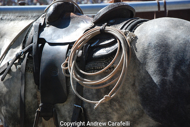 A horse awaits his rider for the next round of steer roping at a Rodeo in Colorado.