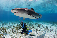 pk11539-D. Tiger Shark (Galeocerdo cuvier) and scuba diver (model released). Bahamas, Atlantic Ocean..Photo Copyright © Brandon Cole. All rights reserved worldwide.  www.brandoncole.com..This photo is NOT free. It is NOT in the public domain. This photo is a Copyrighted Work, registered with the US Copyright Office. .Rights to reproduction of photograph granted only upon payment in full of agreed upon licensing fee. Any use of this photo prior to such payment is an infringement of copyright and punishable by fines up to  $150,000 USD...Brandon Cole.MARINE PHOTOGRAPHY.http://www.brandoncole.com.email: brandoncole@msn.com.4917 N. Boeing Rd..Spokane Valley, WA  99206  USA.tel: 509-535-3489