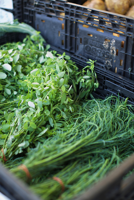 BROOKLYN, NY - August 15, 2015: The Sunset Park Greenmarket, hosted by GrowNYC on Fourth Avenue between 59th and 60th Streets.<br /> Credit: Clay Williams.<br /> <br /> &copy; Clay Williams / http://claywilliamsphoto.com