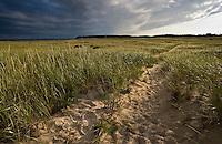Coastal Grasses - Chatham Beach - Cape Cod - Massachusetts