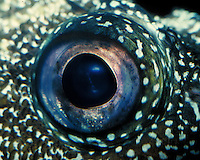 close up of a fish eye. Monterey California, Monterey Bay Aquarium.