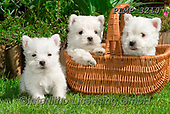 Marek, ANIMALS, REALISTISCHE TIERE, ANIMALES REALISTICOS, dogs, photos+++++,PLMP3210,#a#, EVERYDAY