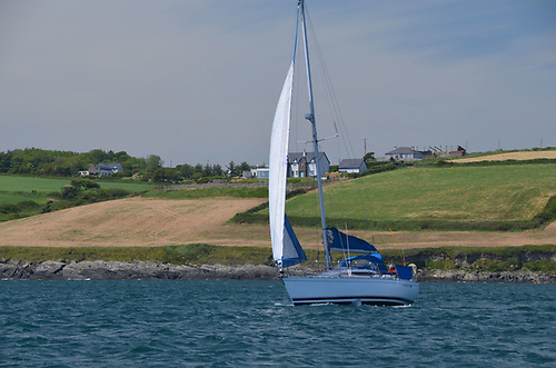 Kinsale Yacht Bay Tiger