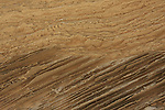 Israel, Sharon region, Calcareous sandstone at Hadera Beach