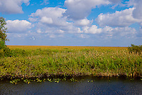 Alligator Alley, Big Cypress Preserve, the Everglades in Southwest Florida.