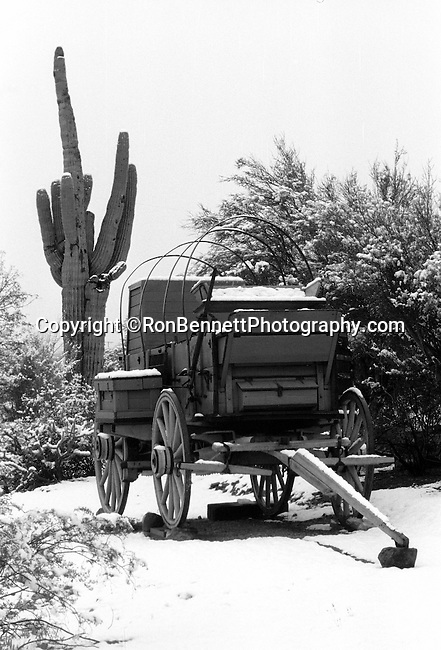 Chuck wagon and saguaro cacti in snow Wickenburg Arizona, chuck wagon, Saguaros, carnegiea gigantea, cacti of Southwest, Sonoran Desert, Southwest, Arizona, State of Arizona, Southwest, desert, 48th State, Last of contiguous states,Grand Canyon, Indian reservations, four corners, desert landscape, exrophyte, western United States, Southwest, Mountains, plateaus, ponderosa pines, Colorado River,  Mountain lion, Navajo Nation, No daylight savings time, Arizona Territory, Fine Art Photography by Ron Bennett, Fine Art, Fine Art photography, Art Photography, Copyright RonBennettPhotography.com © Fine Art Photography by Ron Bennett, Fine Art, Fine Art photography, Bennett, Art Photography, Copyright RonBennettPhotography.com ©