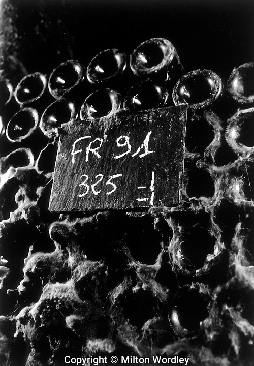 Old bottles at Domiane de l'Arlot