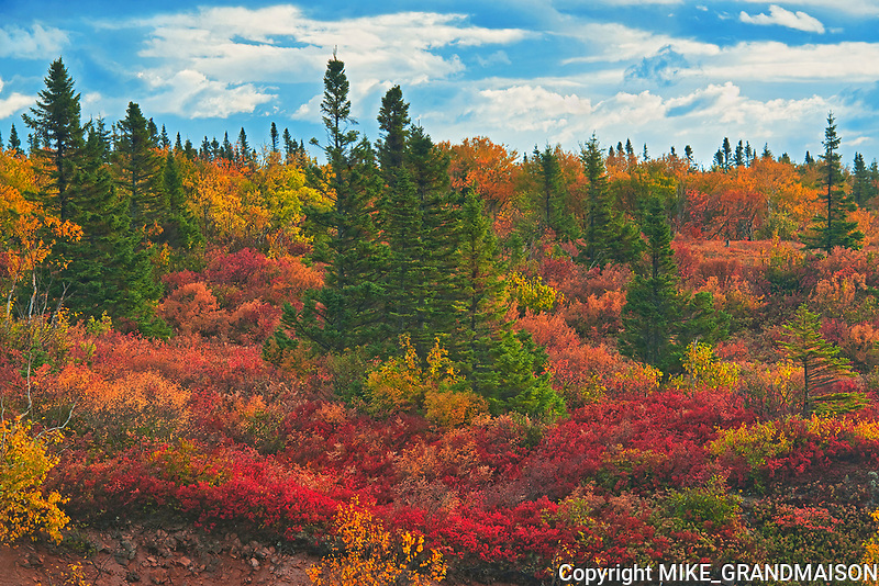 Autumn on the highlands by the Cabot Strait <br />