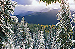 October snow in Lolo National Forest with larch trees turning yellow