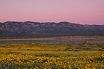 Sunset over Soda Lake in Carrizo Plain National Monument with yellow wildflowers and lake reflection