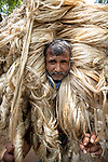 Workers appear to be wearing large golden wigs as they carry a heavy bundle of jute fibre.  Their bodies are enveloped with the heavy natural fibres, with only their faces visible as they each carry around 50kg of jute on their shoulders.<br /> <br /> The unusual images were captured by photographer Azim Khan Ronnie in Manikganj, Bangladesh.  SEE OUR COPY FOR DETAILS.<br /> <br /> Please byline: Azim Khan Ronnie/Solent News<br /> <br /> © Azim Khan Ronnie/Solent News & Photo Agency<br /> UK +44 (0) 2380 458800