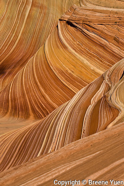 "Striated sandstone formations of ""The Wave"", near Page, Arizona, October 2007"