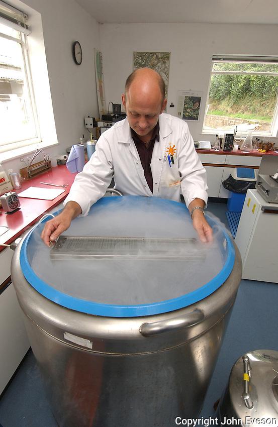 Lowering semen straws into liquid nitrogen for freezing.