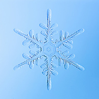 Snowflake Yanling - Stellar Dendrite Snowflake