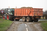 Contractors lifting sugar beet in South Lincolnshire<br /> &copy;Tim Scrivener Photographer 07850 303986<br />      ....Covering Agriculture In The UK....