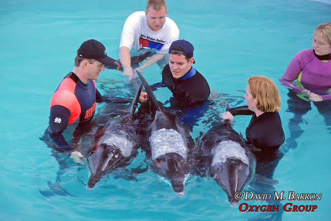 Working With Stranded Rough-toothed Dolphins