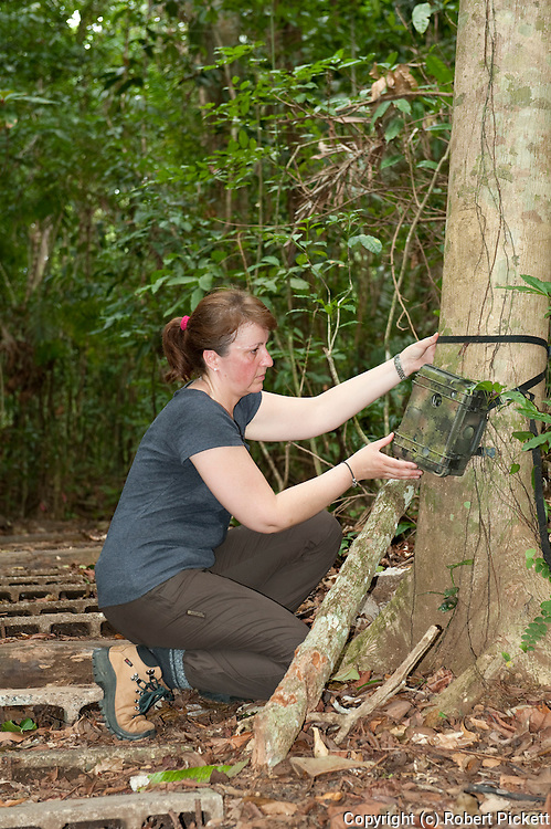 Woman checking Remote Camera Trap, Panama, Central America, Barro Colorado Island