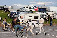 2/10/2010.  A traveler rides his trotter at the Ballinasloe Horse Fair, Ballinasloe, County Galway, Ireland. Picture James Horan