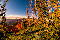 Cedar Breaks National Monument, Utah, USA