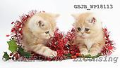 Kim, CHRISTMAS ANIMALS, photos, GBJBWP18113,#XA# stickers