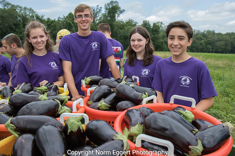Volunteers from local businesses and organizations volunteer to work on this non-profit farm in North Grafton that provides food to the Worcester County Food Bank