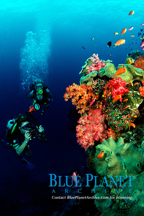 underwater photographer snaps a photo of a reef scene, Fiji, Pacific Ocean