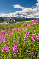 Vehicle travel, fireweed, along the Glenn Highway, southcentral, Alaska.