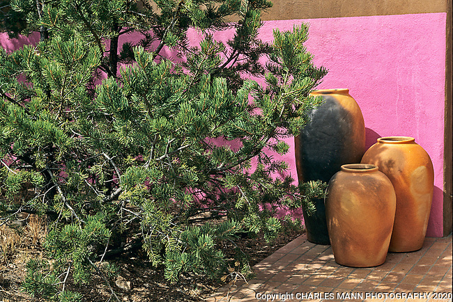 A mundane trio of terra cotta urns nestling under the shade of a pinon tree takes on an atristic air when a bright pink wall is added to the mix in the garden of Nancy Dickensen of Santa Fe.