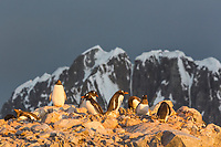 Booth Island, Antarctic peninsula