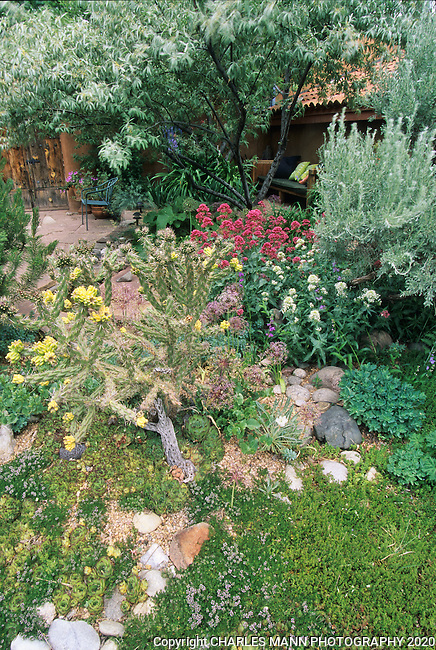 In the southwest and Rocky Mountain areas, water wise landscape designs come in all colors and shapes and incorporate a wide range of both nativespecies as well as appropriate adapted plants, ranging from succulents and cacti to endemic penstemons and traditional perennials. Avid gardeners and artists Joan and Joel Brink created a colorful drought tolerant cottage garden at the east side Santa Fe compund.
