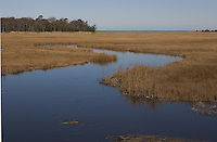 Meandering salt marsh creek, late winter, high tide, NJ, Delaware Bay, Dias Creek