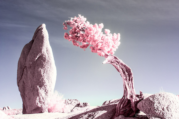 Colorful infrared image of lone tree and tall rock