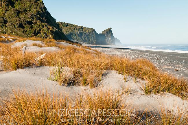 Three Mile Beach, pingao and sand dunes, Westland Tai Poutini National Park, UNESCO World Heritage Area, West Coast, New Zealand, NZ