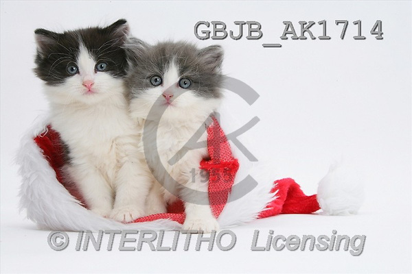 Kim, CHRISTMAS ANIMALS, photos(GBJBAK1714,#XA#) stickers