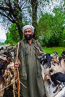 Herding goats and sheep along a road near Srinagar, Kashmir, Jammu and Kashmir State, India.