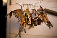 Sao Romao_MG, Brasil...Peixes mortos dependurados em Sao Romao, Minas Gerais.  ..Dead fishes hanging in Minas Gerais...Foto: LEO DRUMOND / NITRO