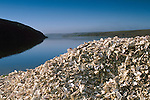 Mound pile of oyster shells at Schooner Bay, Drakes Estero, Point Reyes National Seashore, Marin County, California