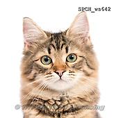 Xavier, ANIMALS, REALISTISCHE TIERE, ANIMALES REALISTICOS, FONDLESS, photos+++++,SPCHWS642,#A#