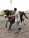 June 13, 2010.Zenyatta, riden by Mike Smith wins the Vanity Handicap at Hollywood Park, Inglewood, CA, and sets a new record, with 17 straight wins.