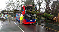BNPS.co.uk (01202)55883<br /> Pic: DorsetPolice/BNPS<br /> <br /> Passengers had a miraculous escape when a large tree crashed through the roof of a double decker bus.<br /> <br /> The 40ft tree was blown over in Storm Erik and fell through the front of the X6 Morebus in Poole, Dorset.<br /> <br /> Luckily, there were only 5 oassengers on the bus and it is believed the front seats on the upper deck were empty at the time.