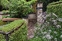 Sambucus nigra European elderberry in garden with bench, hedges, trees, brick walkway, patio