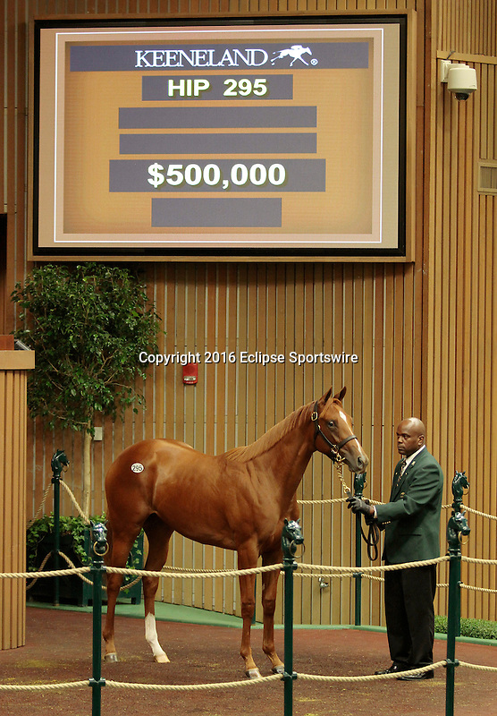 LEXINGTON, KY - September 13: Hip # 295 Galileo (IRE) - Dietrich Filly consigned by Gainesway sold for $500,000 at the September Yearling sale at Keeneland.  September 13, 2016 in Lexington, KY (Photo by Candice Chavez/Eclipse Sportswire/Getty Images)