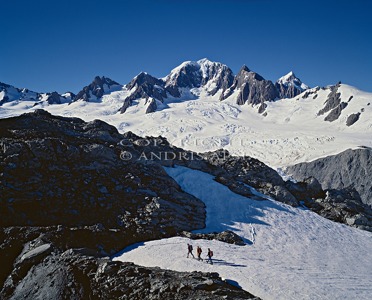 Climbers on the Upper Fox Glacier. Mount Tasman in background. Westland National Park New Zealand