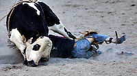 bull ride wreck, Jackson Hole Rodeo, Jackson Hole, Wyoming