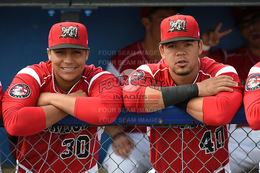 Batavia Muckdogs Carlos Duran (30) and Victor Castro (40) - with photo bomb by Aaron Blanton (right hand corner) - before a game against the Lowell Spinners on July 17, 2014 at Dwyer Stadium in Batavia, New York.  Batavia defeated Lowell 4-3.  (Mike Janes/Four Seam Images)