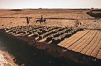 World Civilization:  Afghanistan--adobe bricks drying.  Jean-Louis Bourgeois & Carollee Pelos, SPECTACULAR VERNACULAR, 1989.  Photo '91.