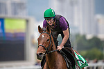 SHA TIN, HONG KONG – December 5: True Self at trackwork on December 5 at Sha Tin Race Course in Hong Kong before starting in the Longines Hong Kong Vase. Michael McInally/Eclipse Sportswire/CSM